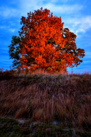 TreeOnFire_01-Edit copy
